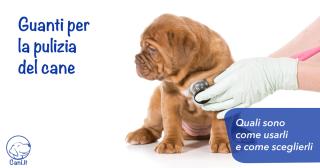 Guanti per la pulizia del cane: quali sono, come usarli e come sceglierli