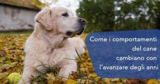 Come i comportamenti del cane cambiano con l'avanzare degli anni