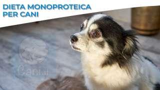 L'alimento MONOPROTEICO è davvero utile per le allergie del cane?