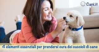 4 elementi essenziali per prendersi cura dei cuccioli di cane