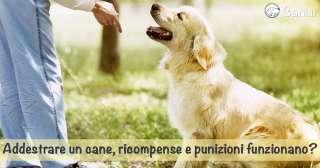 Addestrare un cane, ricompense e punizioni funzionano?
