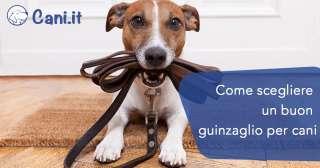 Come scegliere un buon guinzaglio per cani