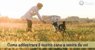 Come addestrare il vostro cane a venire da voi