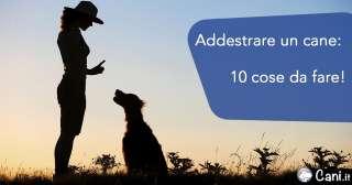Addestrare un cane: 10 cose da fare!