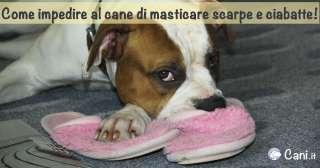 Come impedire al cane di masticare scarpe e ciabatte!