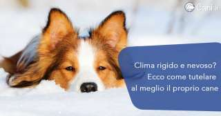 Clima rigido e nevoso? Ecco come tutelare al meglio il proprio cane