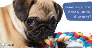 Come prepararsi bene all'arrivo di un cane?