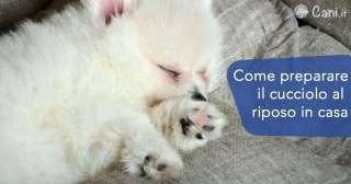 Come preparare il cucciolo al riposo in casa