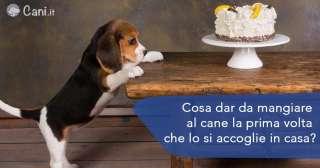 Cosa dar da mangiare al cane la prima volta che lo si accoglie in casa?