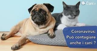 Coronavirus: può contagiare anche i cani?