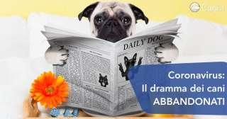 Coronavirus, il dramma dei cani abbandonati