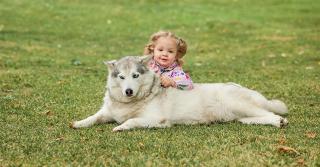 Perché i bambini vengono morsi spesso dai cani?