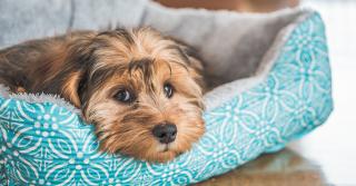Avvelenamento, cosa fare per la salute del cane
