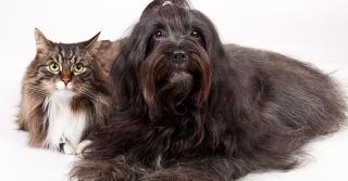 """Cane e gatto: come farli """"conoscere"""" la prima volta"""