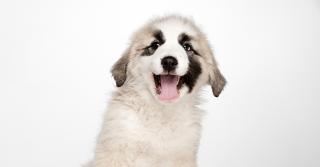 Come far ingrassare il tuo cane?