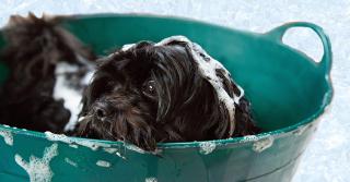 Come far piacere il momento del bagnetto al tuo cane