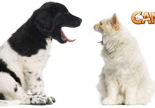 Pericoloso se un cane mangia il cibo del mio gatto - Cosa mangia un cucciolo di talpa ...