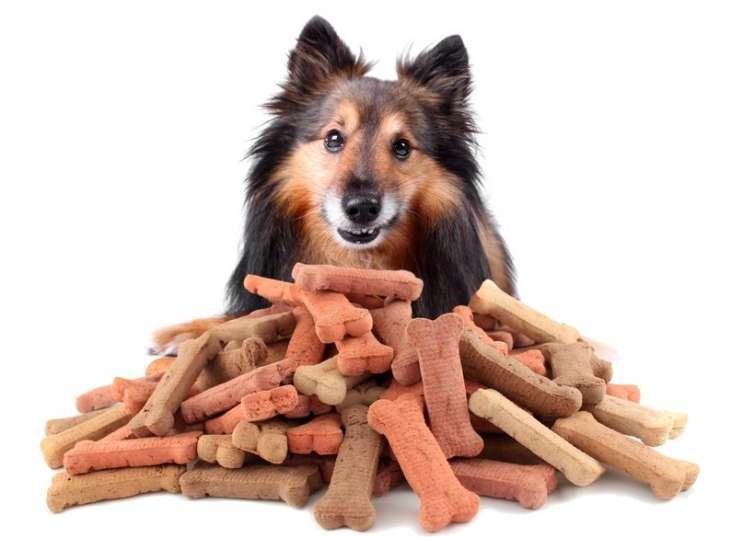 Il Cane Non Mangia Soluzione Alla Mancanza Di Appetito