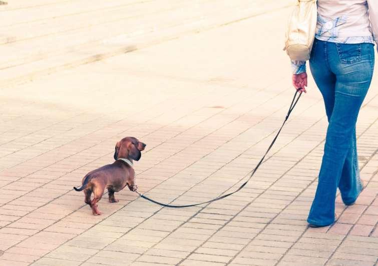 Togli il cappottino a quel cagnolino Wired