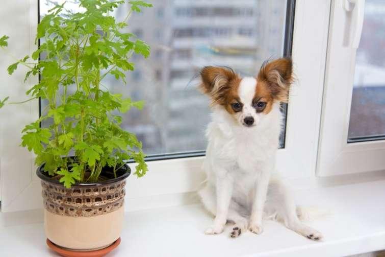 Cani da appartemento: Quale razza scegliere?