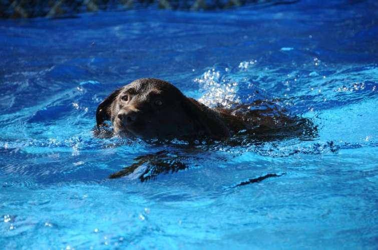 Cosa fare in caso di annegamento del cane