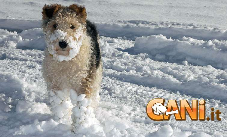 Come proteggere le zampe del cane da neve e gelo
