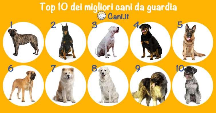 Top 10 Dei Migliori Cani Da Guardia