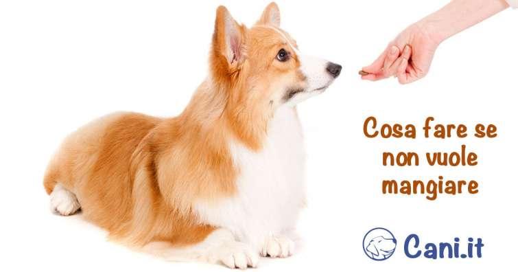 Come Fare Se Il Cane Non Vuole Mangiare