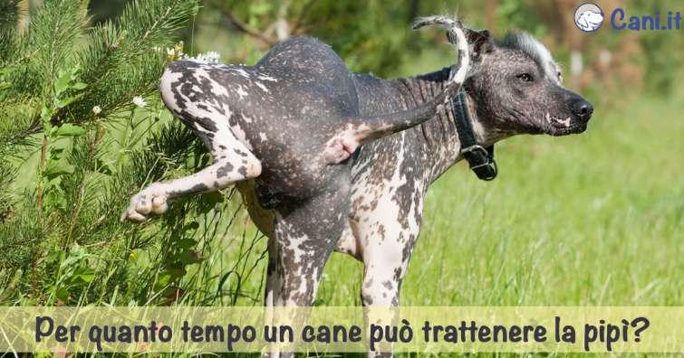 cane che urina spesso di notte