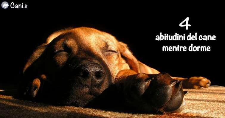 4 Abitudini Del Cane Mentre Dorme