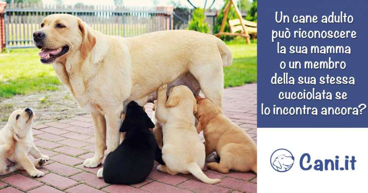 Un Cane Adulto Può Riconoscere Un Membro Della Sua Stessa Cucciolata