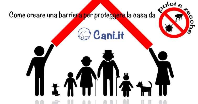 Come creare una barriera per proteggere la casa da pulci e zecche - Creare una casa ...