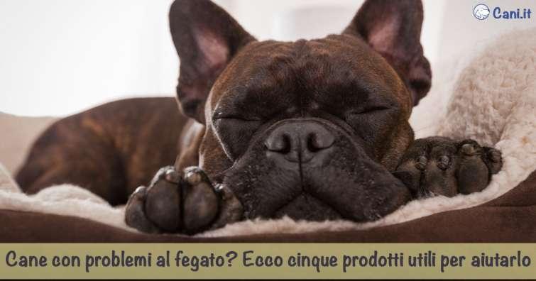dieta per insufficienza epatica cronica cane