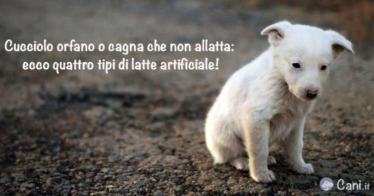 Cucciolo Orfano O Cagna Che Non Allatta Ecco Quattro Tipi Di Latte