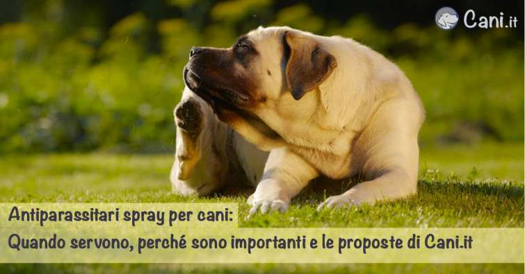 Antiparassitari spray per cani  quando servono 551c0bfd76da