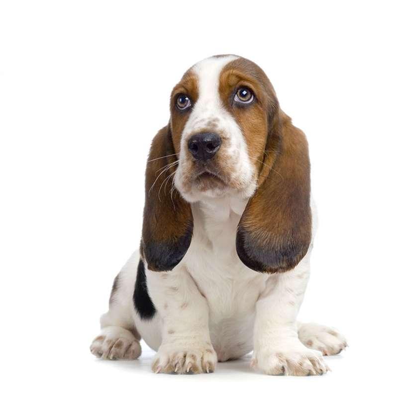 Hush Puppies - Wikipedia.