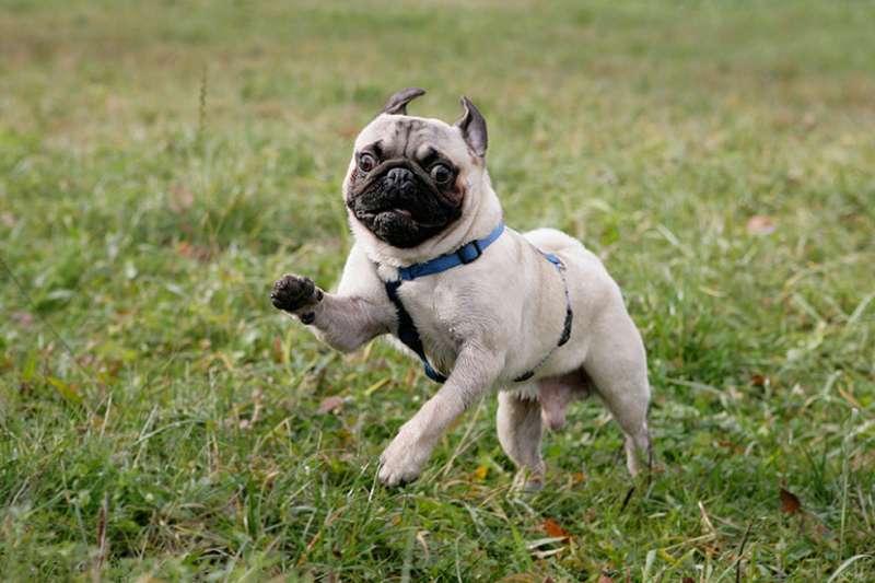 Carlino corre sul prato