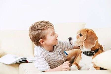 Beagle cane adatto ai bambini