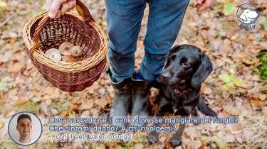 Cosa succede se il cane dovesse mangiare dei funghi?