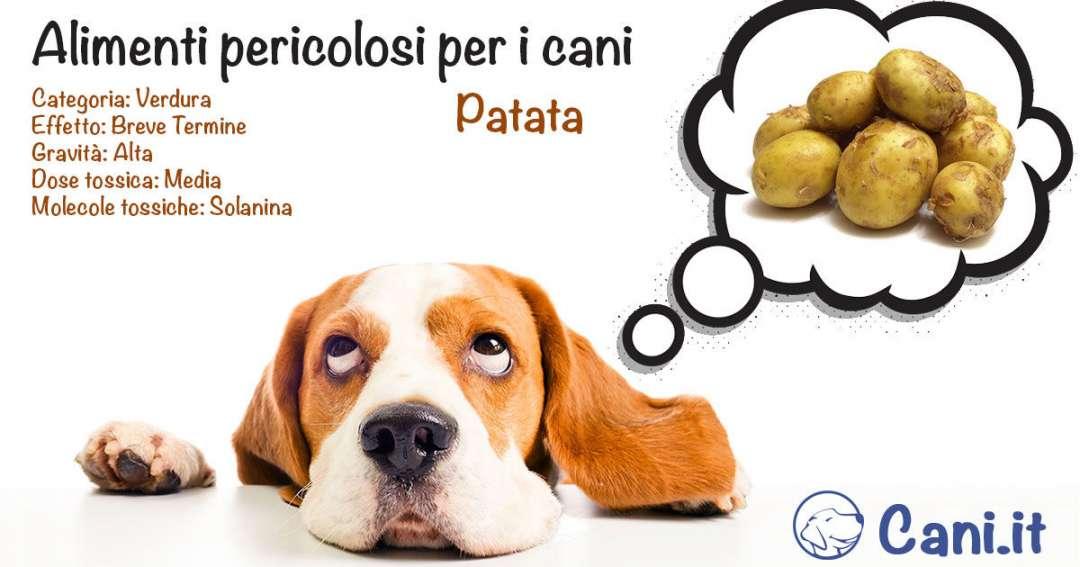 Patata una verdura pericolosa per i cani for Quali verdure possono mangiare i cani