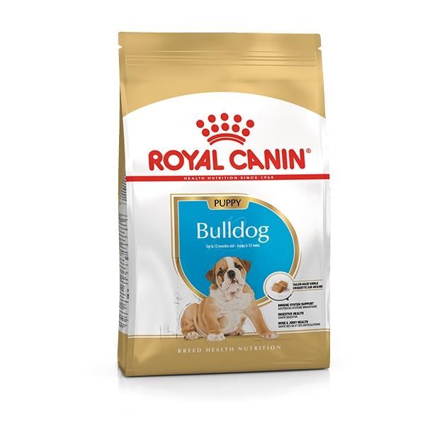Bulldog Inglese Junior