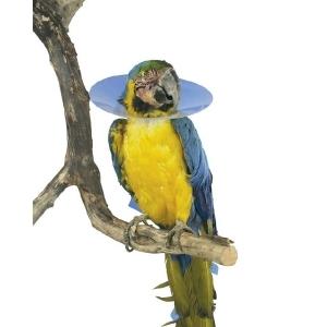 Collare Elisabettiano per Uccelli