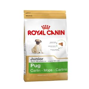 Pug Junior Carlino