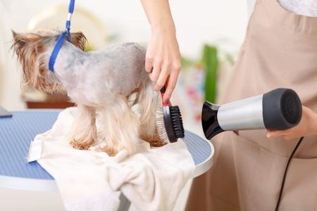 Toelettare cucciolo di cane