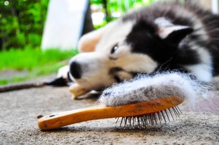 Spazzolare il cane per eliminare i peli morti