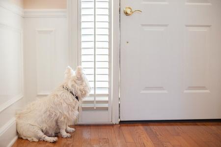 Cane aspetta il tuo ritorno a casa