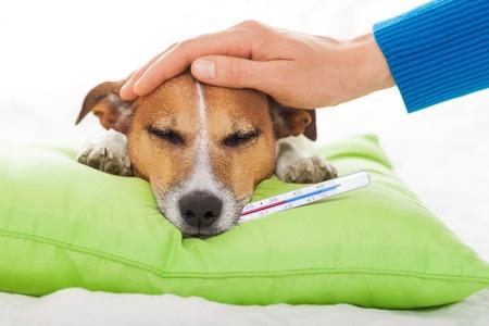 la febbre nel cane