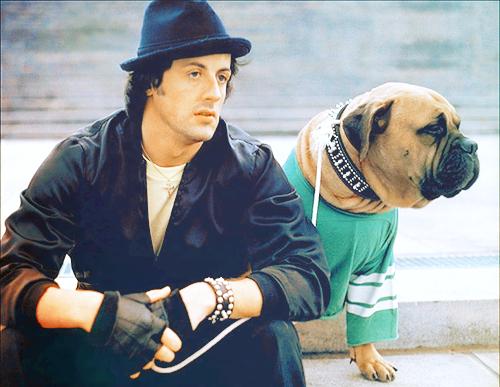 Bullmastiff di Rocky Balboa