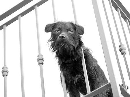 Cane anziano sul balcone