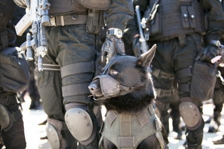 Cani addestrati per il rilevamento bombe